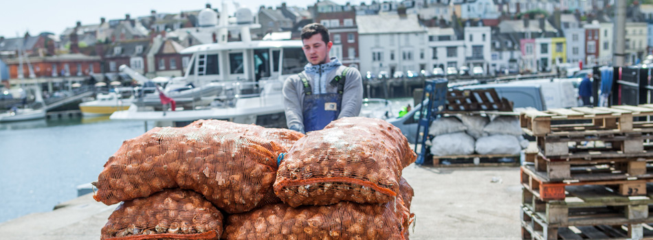 Great British Whelk Revival-In-The-Bag-PR-Weymouth